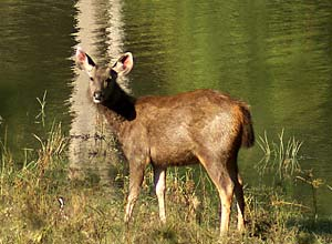 Wildlife in Kanha