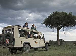 lion camp game drive