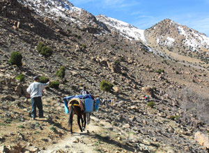 Mules carry most of the luggage during the trek
