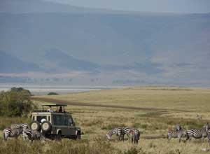 Wildlife viewing in the Ngorongoro Crater