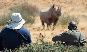 Tracking black rhinos