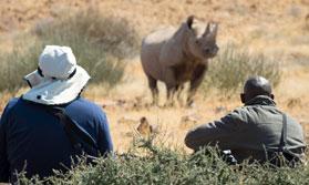 Tracking black rhinos