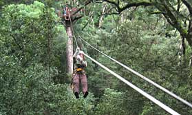 Tree Top Canopy tour