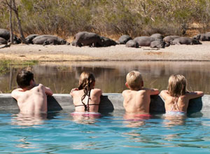 View wildlife from the pool at Machaba