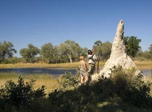 Take a guided walking safari