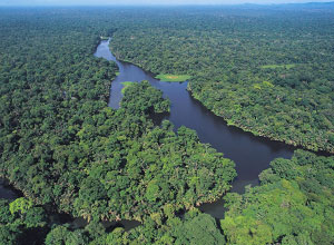 Aerial view of Tortuguero National Park
