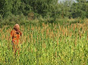 Bishnoi woman