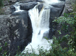See waterfalls and rainforest