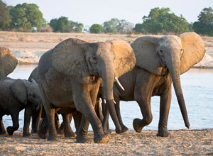 Walking safari on the River Journeys holiday