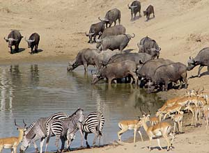 Wildlife at the 'last waterhole'