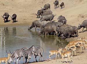 Wildlife at the 'last waterhole'