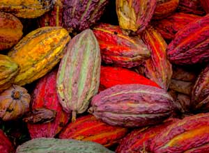 Visit a cocoa plantation from Ecuador cruise train