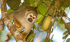 Explore the Amazon by cruise boat