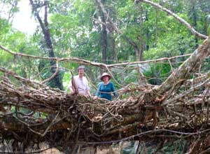 On a living root bridge