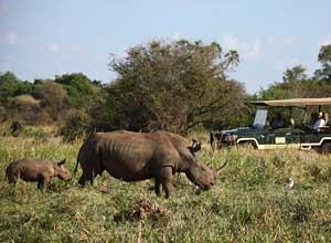 Rhino sactuary