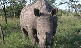 See some of Africa's rarest creatures