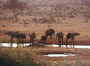 Elephant near waterhole