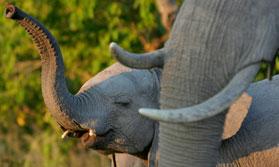 The Elephant Safari