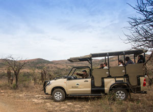 Game drive from Isibindi Rhino Ridge Lodge