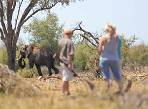 Guided walk at Rhulani Safari Lodge
