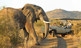 Sun City and Madikwe Family Fun
